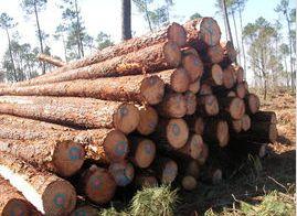 木材板材面临涨价潮 但国内木材加工企业开工率下降尼龙壁虎